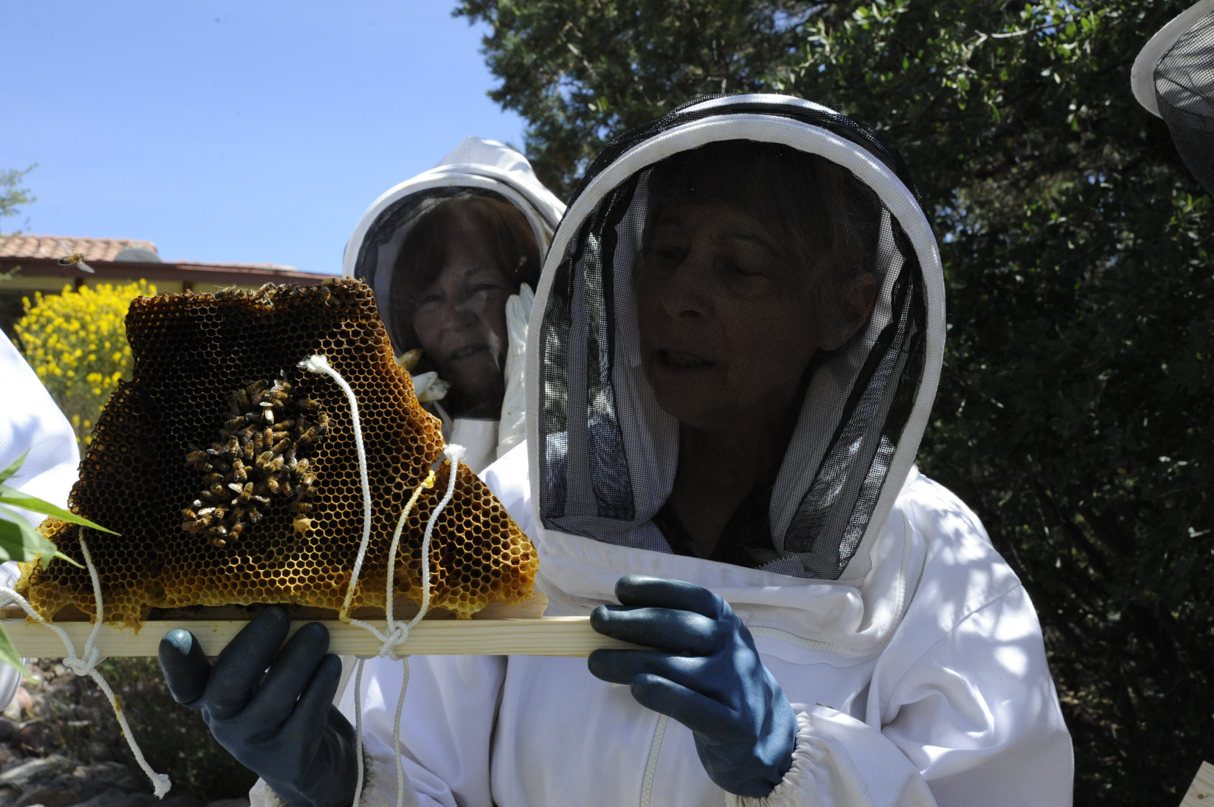 (Press Staff Photo by Geoffrey Plant) Susan Clair, president of the Grant County Beekeepers, inspects a comb from a troubled hive as fellow beekeeper Barbara Maxfeldt looks on. The local beekeeper group has been working on documents to be incorporated into a Silver City 'bee ordinance' that town councilors will vote on at their July 23 meeting.