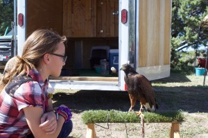 (Press Staff Photo by C.P. Thompson)  Ella Perrault looks at a bird during the 14th annual Mimbres Valley Harvest Festival on Saturday at San Lorenzo Elementary School. The festival brought around 900 people and featured local growers and artists.