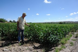 Stan Jones of Jones Farms, which, at about 1850 acres, is the largest agricultural enterprise in the Virden Valley. Jones is  standing in one of his cotton fields, which he said would benefit from a gila diversion and the nearby storage ponds that are proposed by the NM CAP Entity. (Press Staff Photo by  Geoffrey Plant)